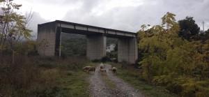 viadotto di completamento circonvallazione centro abitato Francavilla